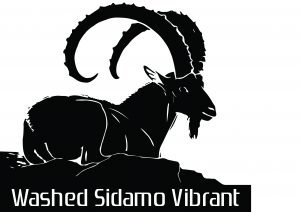 Sidamo Washed-VIBRANT